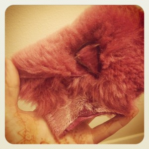 dusty pink closeup